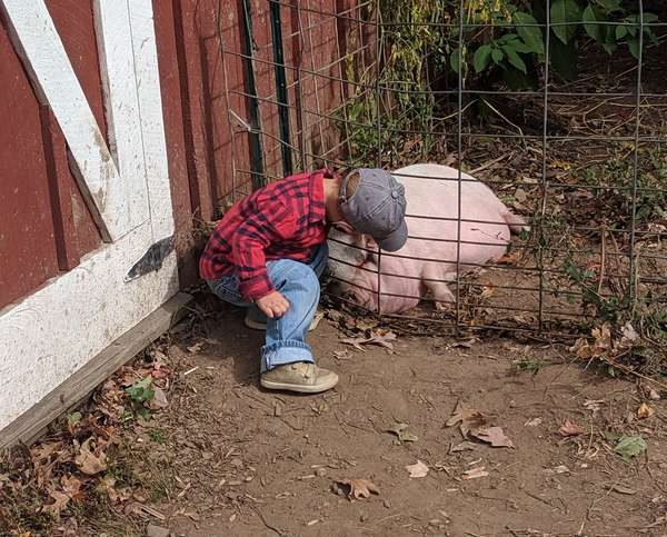 Little boy petting our pig Walter