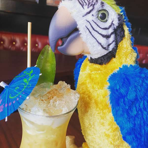 Polly the pirate parrot