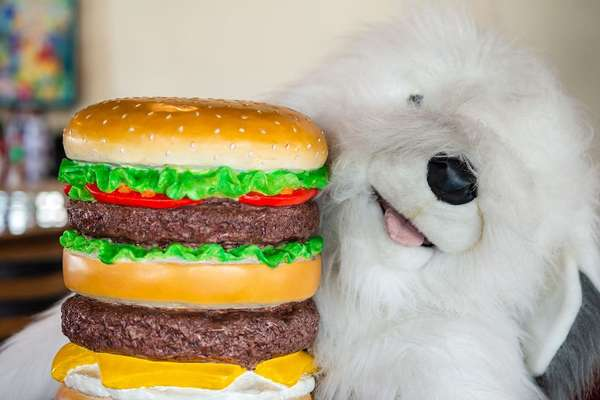 dog with burgers