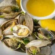 Cape Cod Steamers