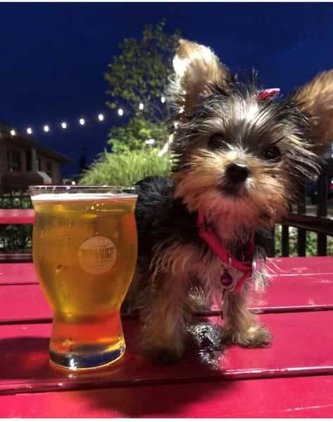 pourhouse puppy patio