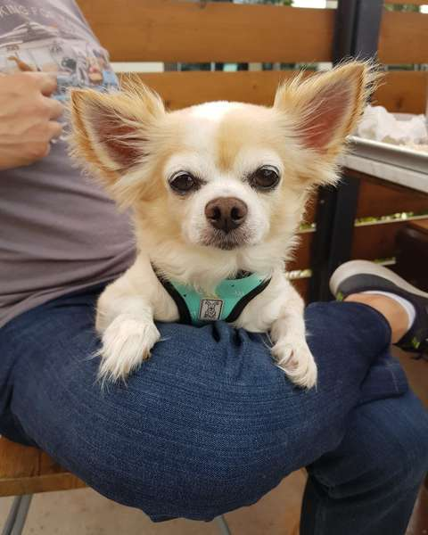 Cute Dog - Bar in Huntington Beach