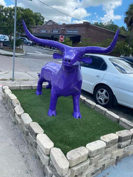 bull outside