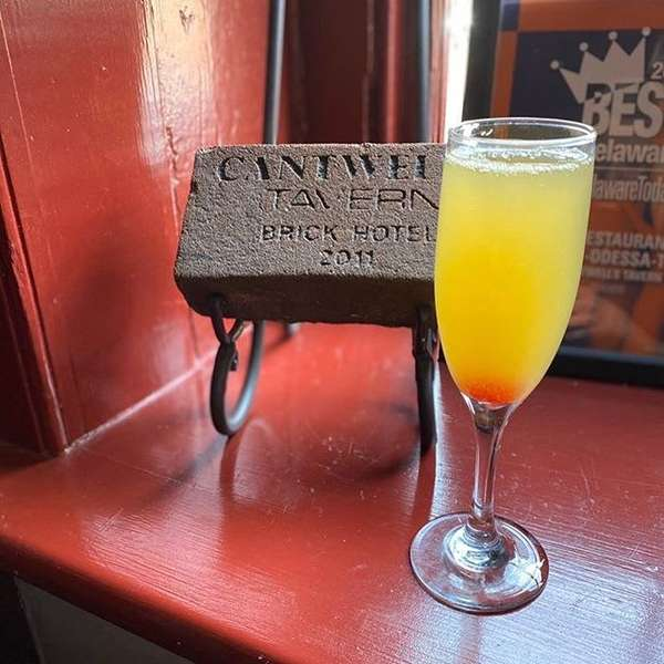 Cantwell's Mimosa