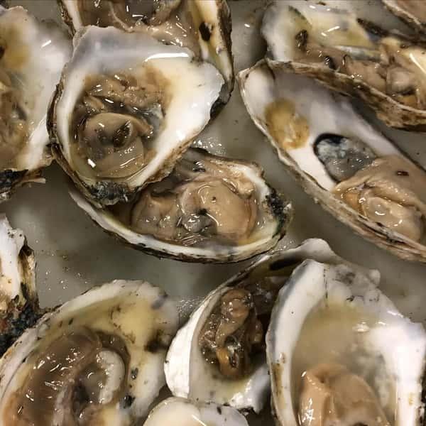 Seasonal Oyster