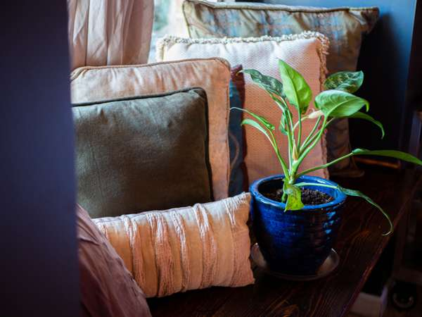 plant and pillows