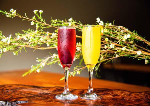 mimosasa