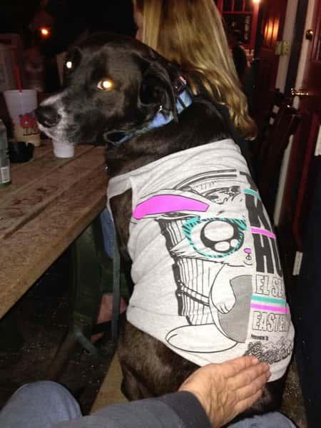 dog in shirt