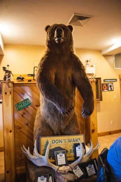 Bear inside Michael's Bridge Diner
