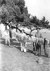 fish hanging