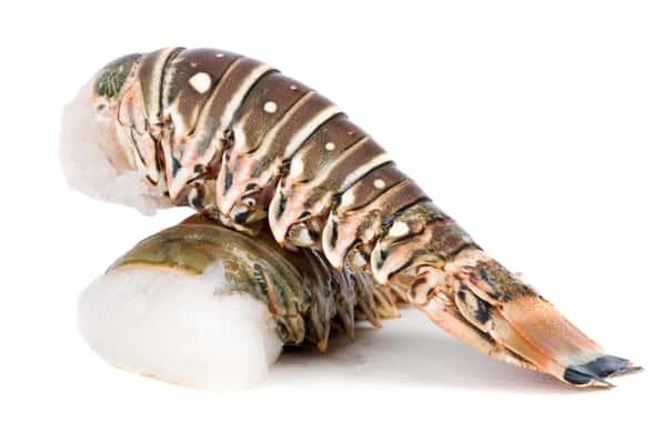 Shellfish Bundle
