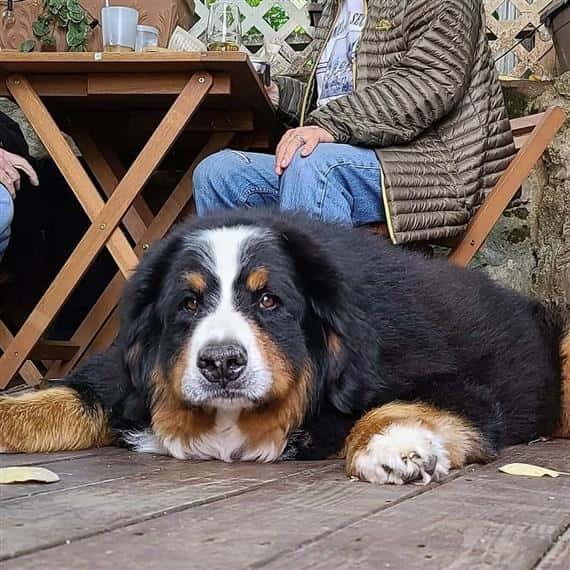 dog sitting with customer