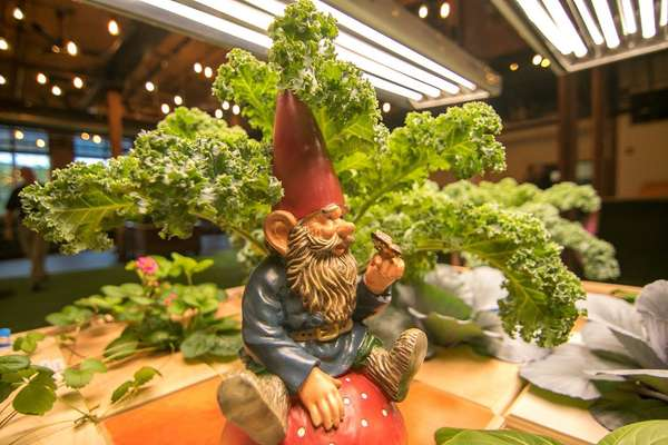 gnome and lettuce