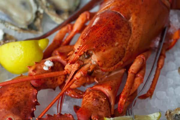 Fresh Whole Main Lobster