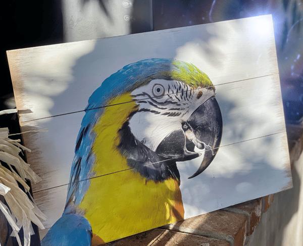 Parrot on Main
