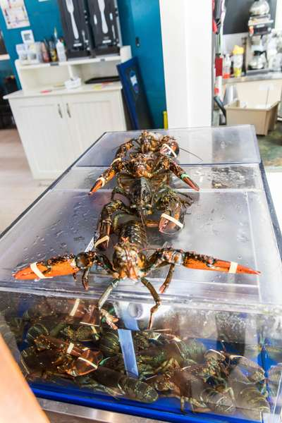 lobsters on a tank